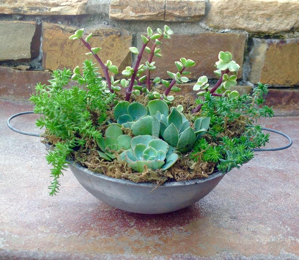 Succulent Container Gardens Garden Treasures By Lisa